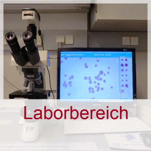 GYN_Laborbereich