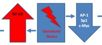 Genotoxic Stress.jpg