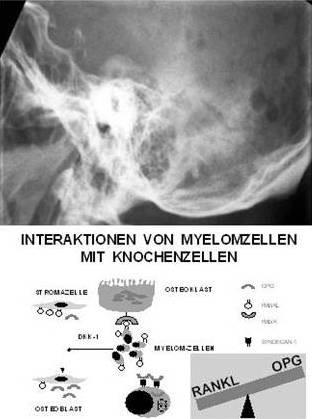 Hofbauerforschung3.jpg