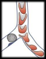gfmvb_logo.jpeg