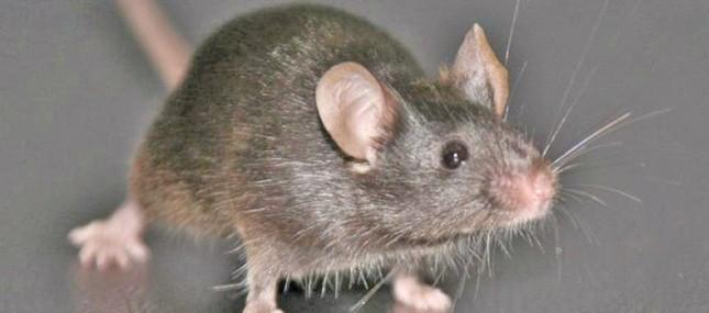 'In vitro' Differenzierung von Rückenmarksvorläufern aus embryonalen Stammzellen (ESC) der Maus