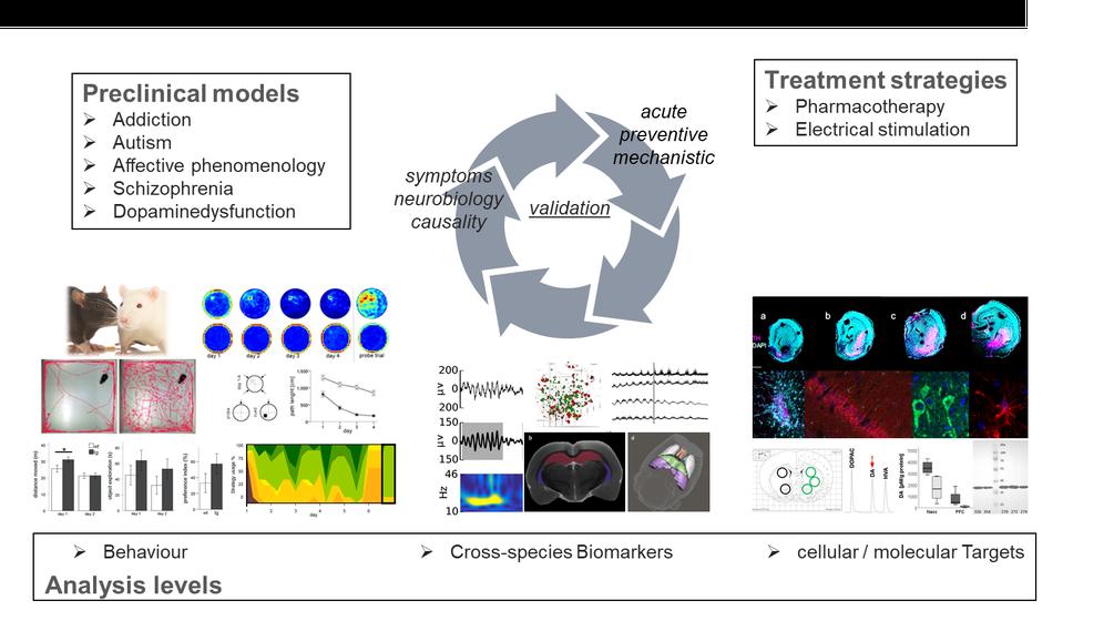 schema_researchfocus_neurobio