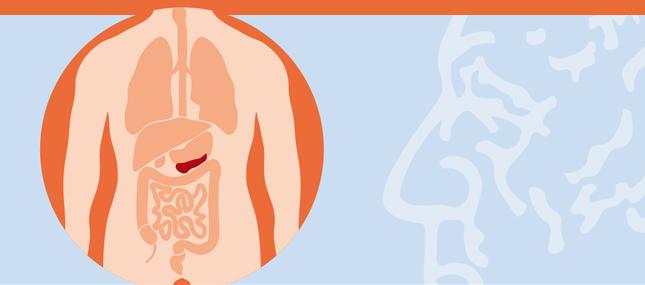 Bauchspeicheldrüse – Pankreas