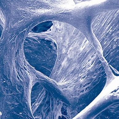 Zellstruktur